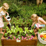 Growing your own vegetable garden with kids